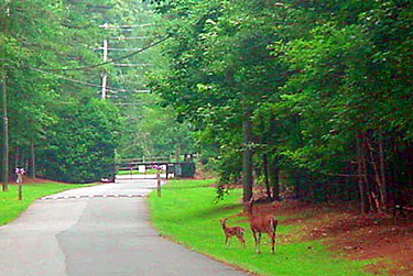 Main Road and Wildlife